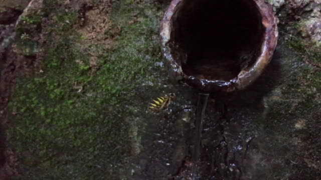 Slow motion footage of bee drinking water from fountain in the forest.