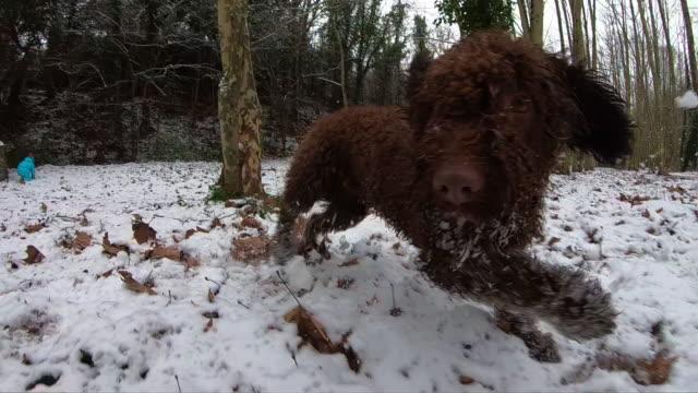 vídeos y material grabado en eventos de stock de slow motion footage of happy dogs running and playing in the snow. - lodo