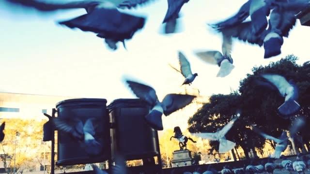 vídeos y material grabado en eventos de stock de slow motion footage of pigeons lifting up in barcelona city square center. - palomitas