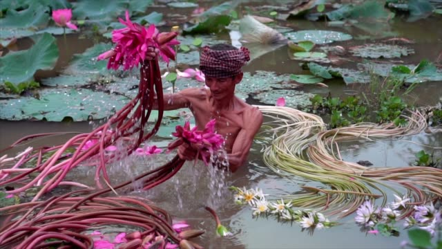 4k slow motion footage of vietnamese old man picking up water lily in the beautiful pink lotus lake at an phu, an giang province, vietnam, culture and life concept - river stock videos & royalty-free footage