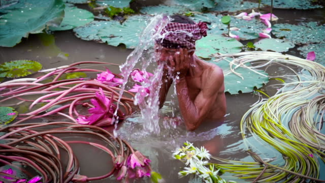 4k slow motion footage of vietnamese old man washing his face in the beautiful pink lotus lake at an phu, an giang province, vietnam, culture and life concept - mekong delta stock videos & royalty-free footage