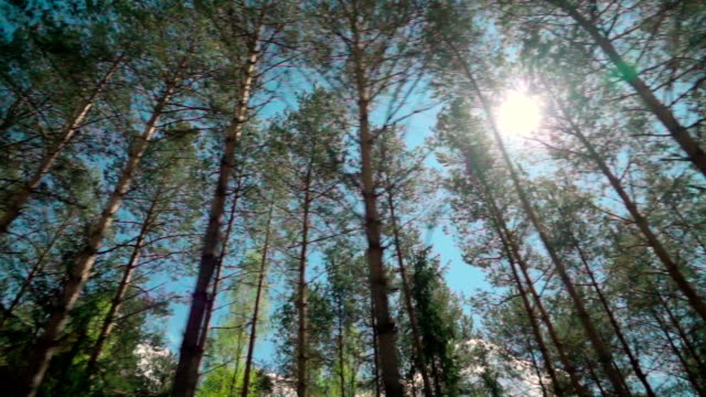 slow motion: forest through the car window - moving past stock videos and b-roll footage