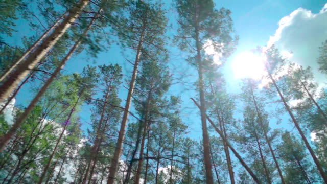 Slow motion: Forest through the car window