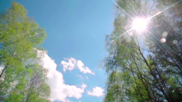 vídeos y material grabado en eventos de stock de cámara lenta : bosque a través de la ventana de coche - lanzar término deportivo
