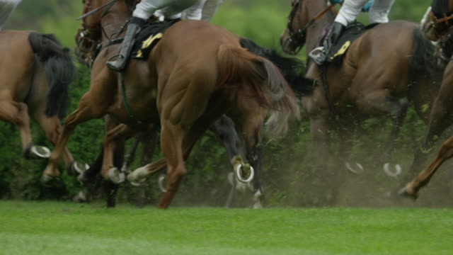 slow motion gallop horse race, group of horses in curve, close up - horse racing stock videos & royalty-free footage
