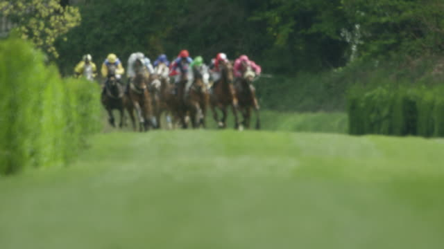 Slow motion Gallop Horse Race, Group of horses in curve entering home straight, total shot