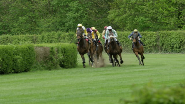 slow motion gallop horse race, group of horses in curve entering home straight, total shot - briglia video stock e b–roll