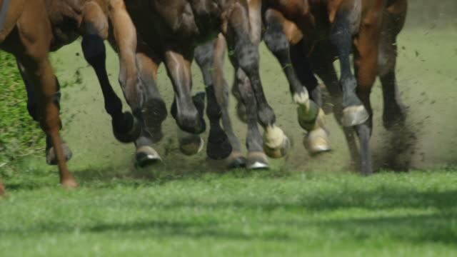 slow motion gallop horse race, group of horses in curve, hooves close up - galopp gangart von tieren stock-videos und b-roll-filmmaterial