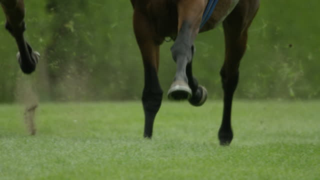 Slow motion Gallop Horse Race, home straight, hooves, close up