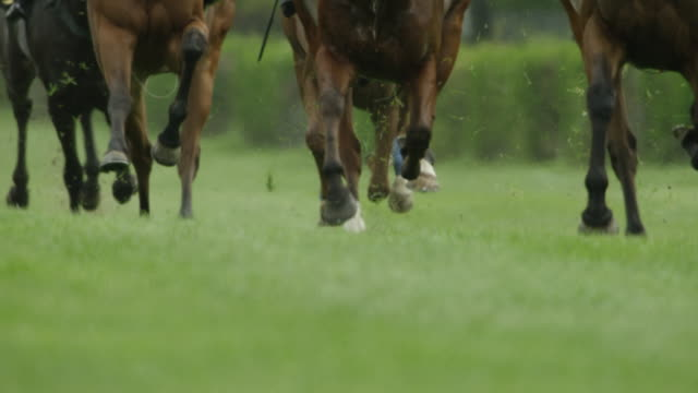 Slow motion Gallop Horse Race, hooves close up, home straight