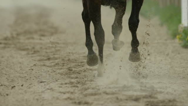 stockvideo's en b-roll-footage met slow motion gallop horse race on sand, hooves, home straight, close up - zeitlupe