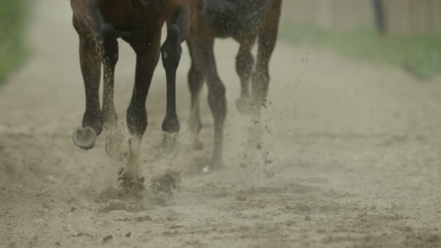 slow motion gallop horse race on sand, hooves, home straight, close up - low section stock videos & royalty-free footage