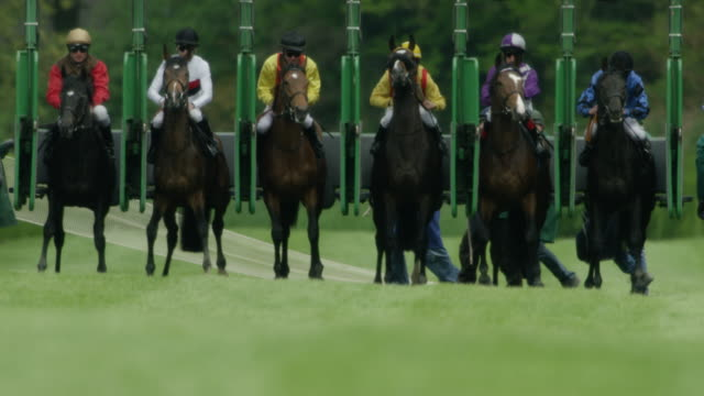 slow motion gallop horse race, start, out of the starting gate, home straight - horse racing stock videos & royalty-free footage