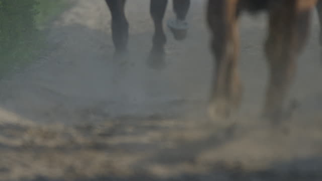 Slow motion Gallop Horse Race
