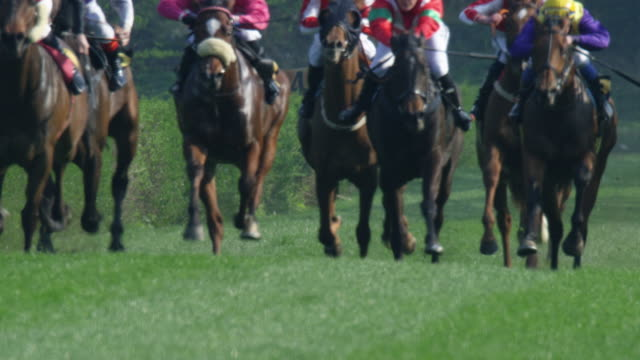 slow motion gallop horse race - horse racing stock videos & royalty-free footage