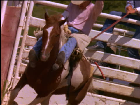 slow motion gate opening in rodeo / cowboy riding bucking bronco comes out - bucking stock videos & royalty-free footage