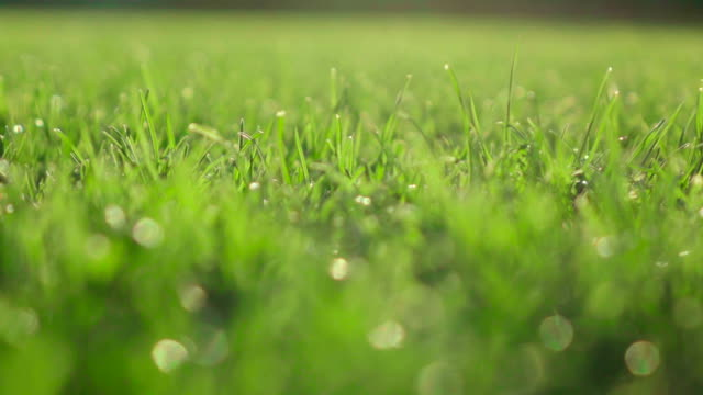Slow motion: Gras field