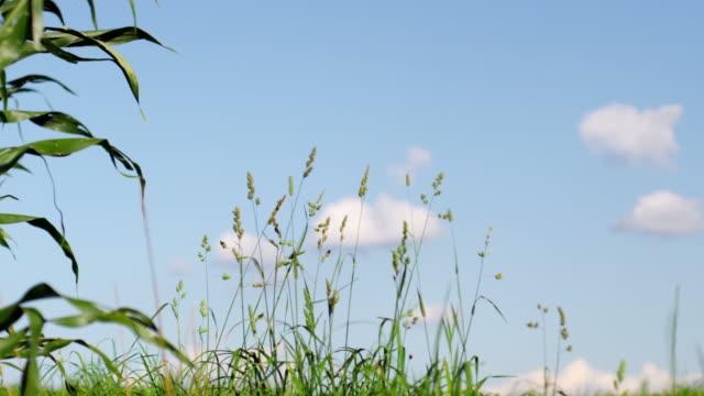 vídeos y material grabado en eventos de stock de cámara lenta de hierba - diez segundos o más