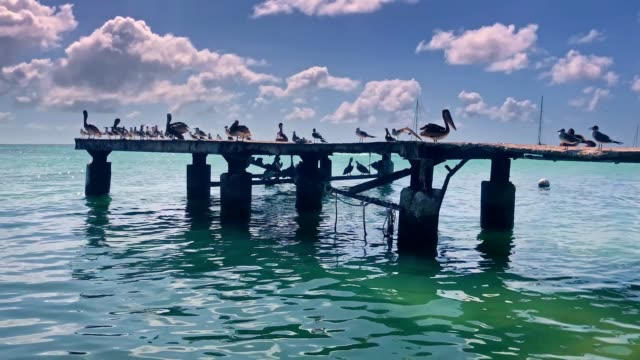 slow motion. group of seagulls standing on pier at a caribbean island beach - sea bird stock videos & royalty-free footage