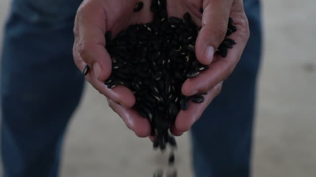 slow motion hand holding and pouring black bean. - bean stock videos & royalty-free footage