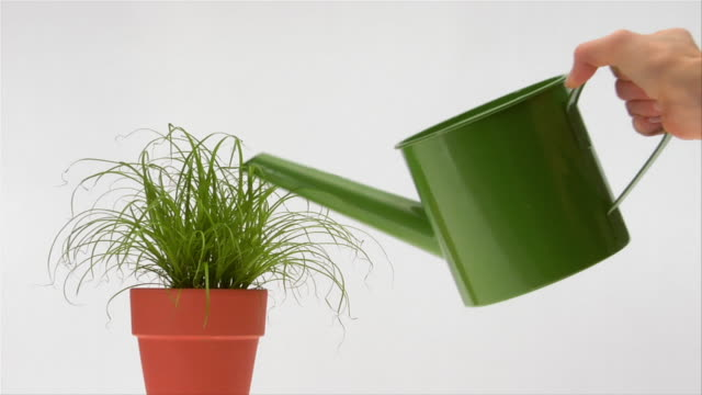 slow motion hand watering houseplant with green watering can - watering can stock videos & royalty-free footage