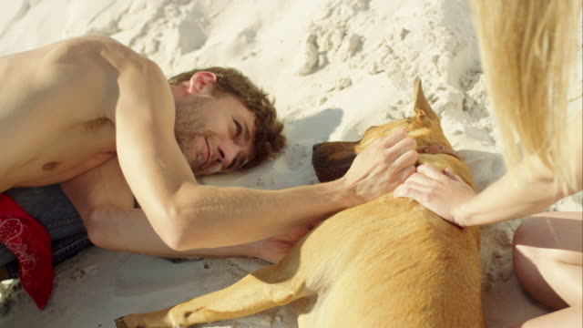 MS  slow motion handheld young couple with dog at the beach