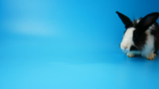 slow motion, happiness rabbit clearing and move on blue screen - animal costume stock videos & royalty-free footage