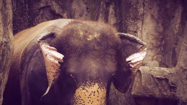 Slow Motion HD: Elephant.