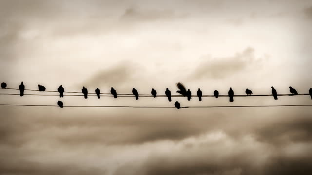 slow motion hd: pigeon on the wires - telephone line stock videos & royalty-free footage