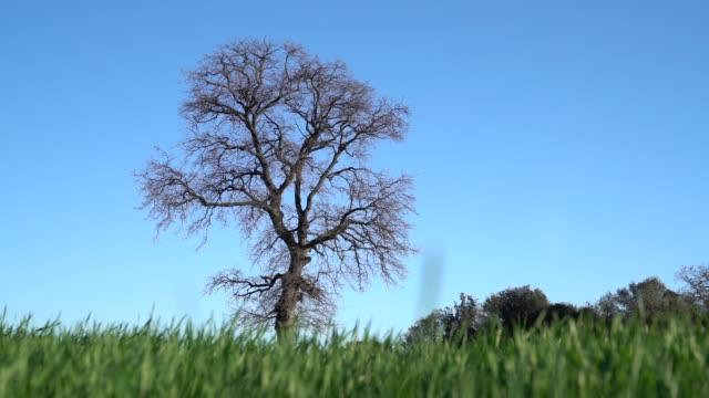slow motion hd video of oak tree in wind - selimaksan stock videos & royalty-free footage