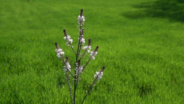 slow motion hd video of wild flower in green field - selimaksan stock videos & royalty-free footage