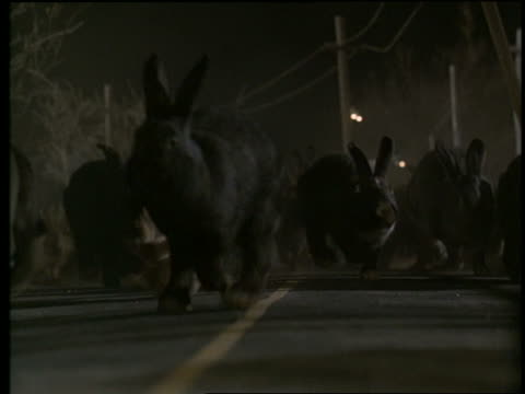 slow motion herd of giant rabbits running on street at night - monster fictional character stock videos & royalty-free footage