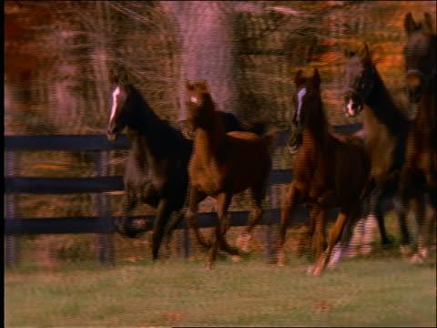 slow motion herd of horses running in field / blue sky in background - 草食性点の映像素材/bロール