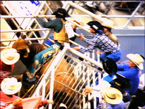 slow motion high angle rodeo rider on bucking bull waiting + coming out of chute / falls off + walks away - bucking bronco stock videos & royalty-free footage