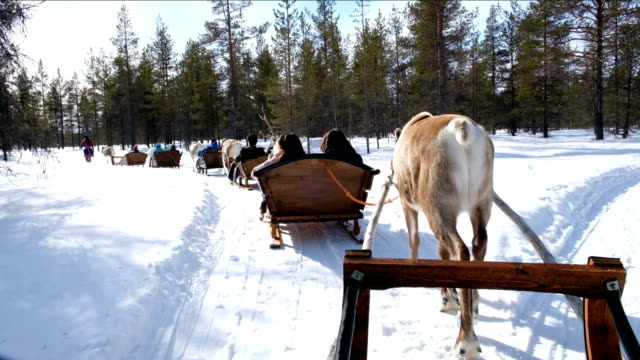 vídeos de stock e filmes b-roll de 4k slow motion : holiday activity. family riding reindeer sleigh ride in rovaniemi, finland - finlândia