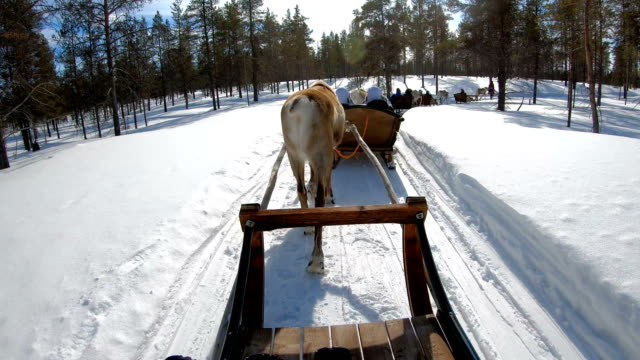 4k slow motion : holiday activity. family riding reindeer sleigh ride in norway - sledge stock videos & royalty-free footage