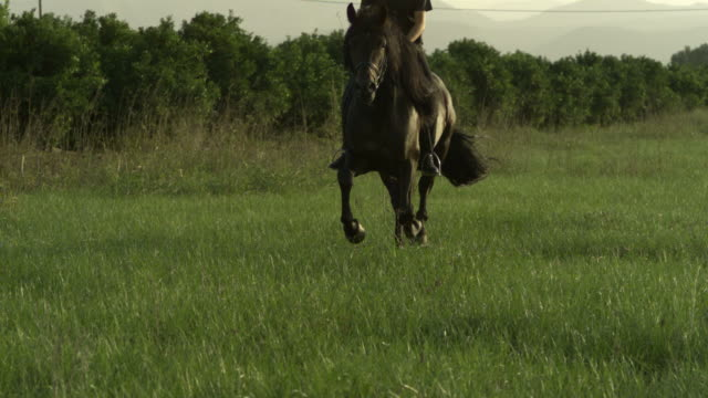 slow motion horse cantering with rider across meadow, spain (individual frames may also be used as a still image. each frame in its raw state is about 6mb or about 12mb as a 16 bit tiff) - horse bit stock videos and b-roll footage