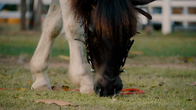 Slow Motion Horse eating grass
