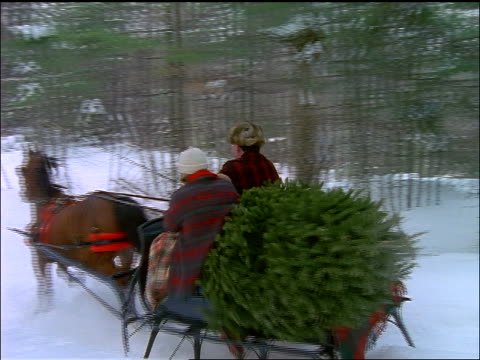 slow motion PAN of horse pulling family on sleigh carrying Christmas tree through forest