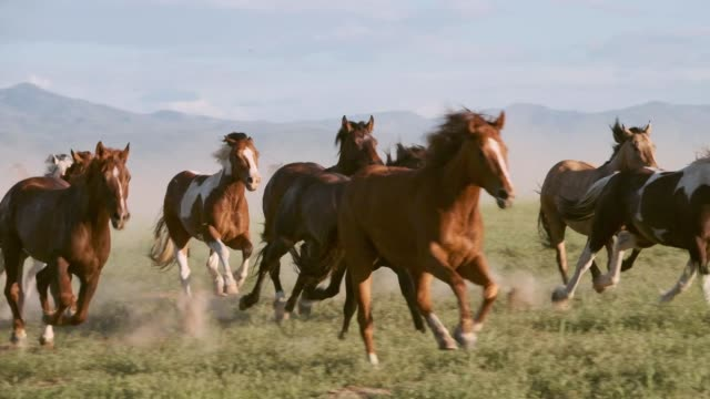 stockvideo's en b-roll-footage met slow motion paarden en cowboys in utah usa - rennen