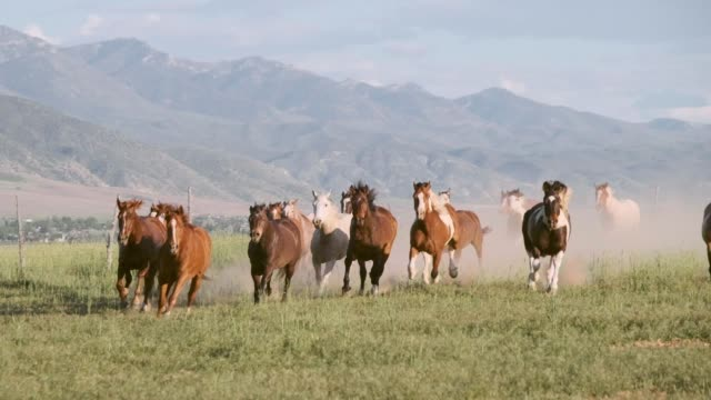 slow motion horses and cowboys in utah usa - stampeding stock videos & royalty-free footage
