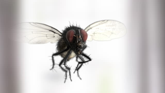 slow motion house fly - limb body part stock videos & royalty-free footage