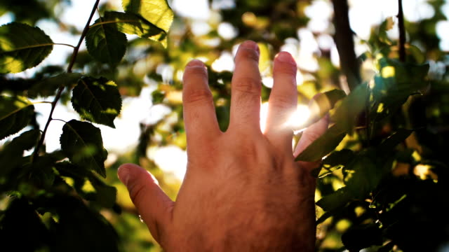 slow motion human hand and sun light - reaching stock videos & royalty-free footage
