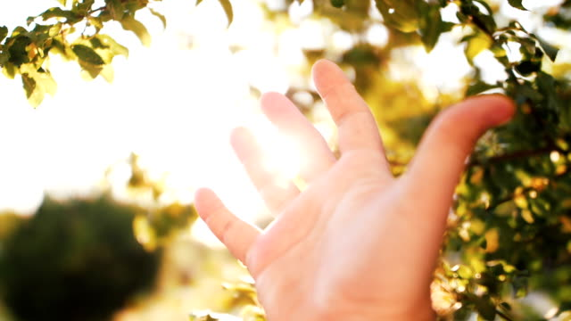 Slow motion Human hand and sun light