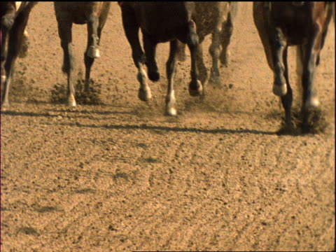 slow motion legs of race horses running toward camera - low section stock videos & royalty-free footage