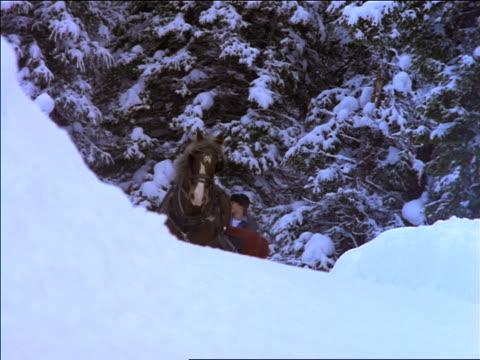vídeos y material grabado en eventos de stock de slow motion low angle horse pulling sleigh with 3 people over snowy rise past camera - herbívoro