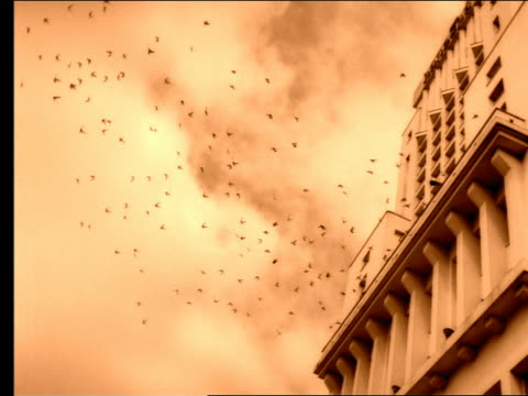 stockvideo's en b-roll-footage met sepia slow motion low angle long shot flock of birds flying from + circling building under clouds - sepiakleurig