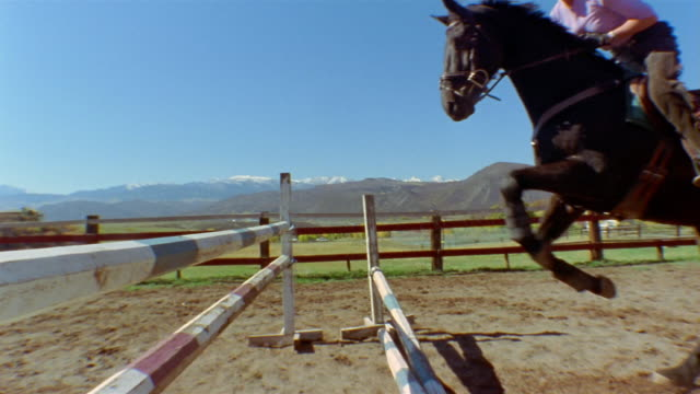 slow motion low angle medium shot female equestrian jumping horse over fence in arena / elk mountains in background / colorado - herbivorous stock videos & royalty-free footage