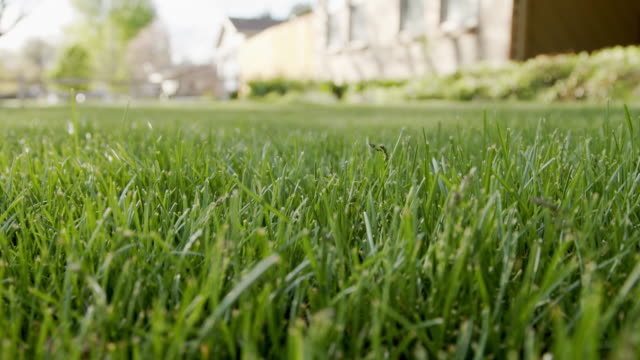 slow motion low angle shot of long tall green grass on the front lawn of a suburban residential neighborhood home - lawn stock videos & royalty-free footage