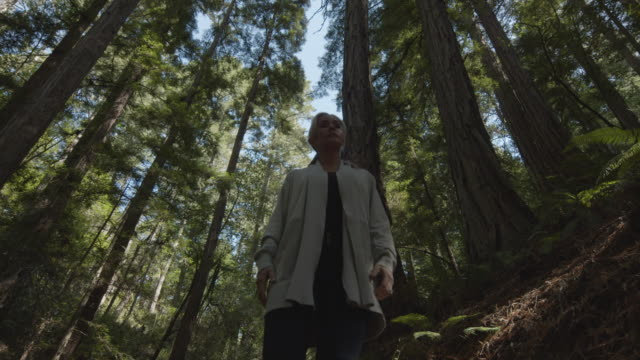 vidéos et rushes de slow motion low angle tracking shot of woman walking on path in forest / muir woods, california, united states - zoom arrière